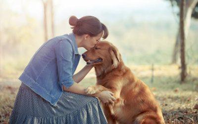 Amor entre cachorro e dono