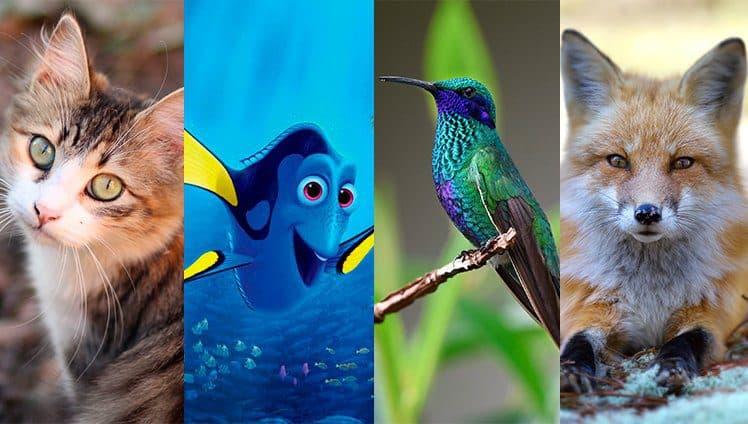 4 animais para se inspirar