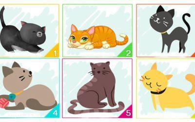 o gato que você escolher