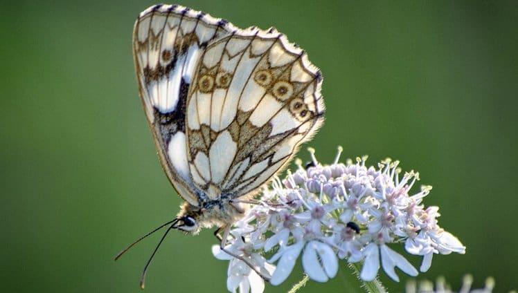 A simbologia das borboletas