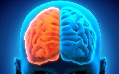 A totalidade do cérebro