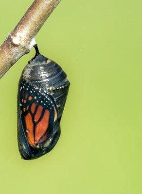 a história da borboleta