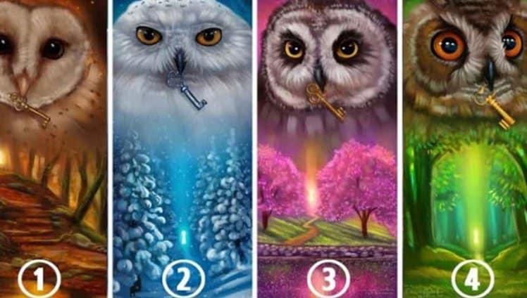 Escolha uma coruja