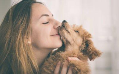 por que os cães ficam tão felizes