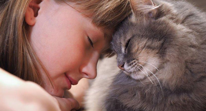 Amor felino