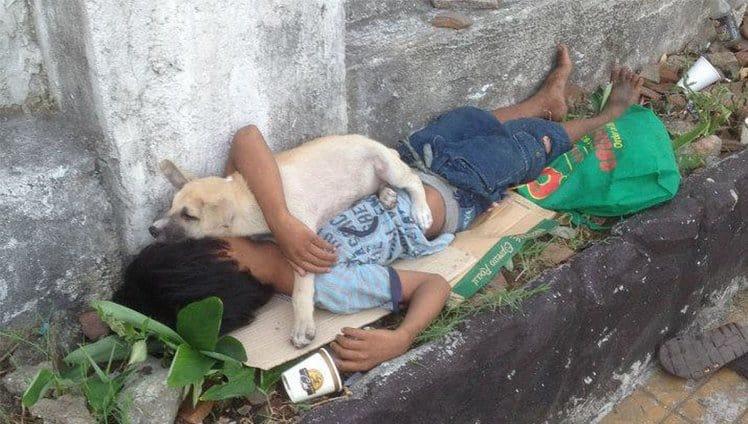 criança adota um cão de rua para