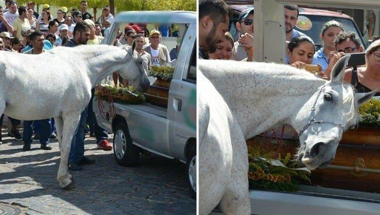 cavalo vai ao funeral