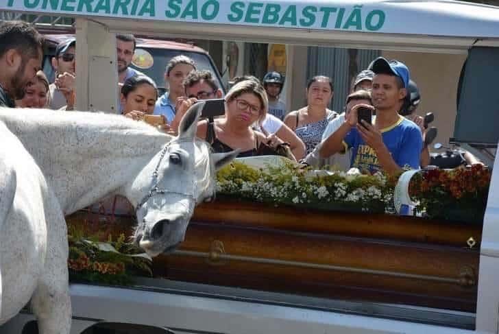 cavalo vai ao funeral4