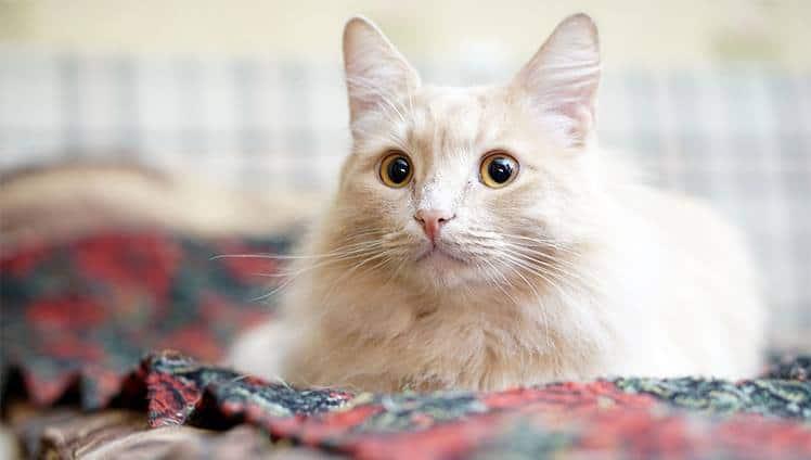 adotar um gato alonga