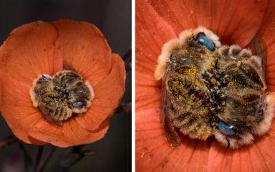 abelhas dormem abraçadas no centro