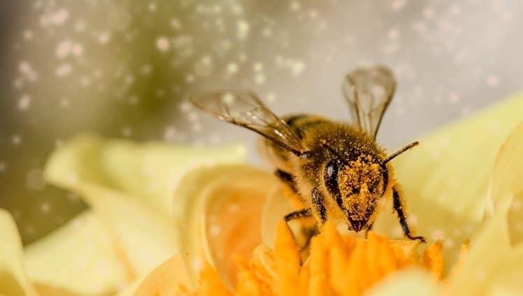 abelhas são declaradas