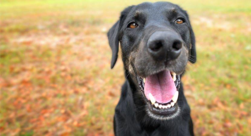 10 coisas que nossos cães