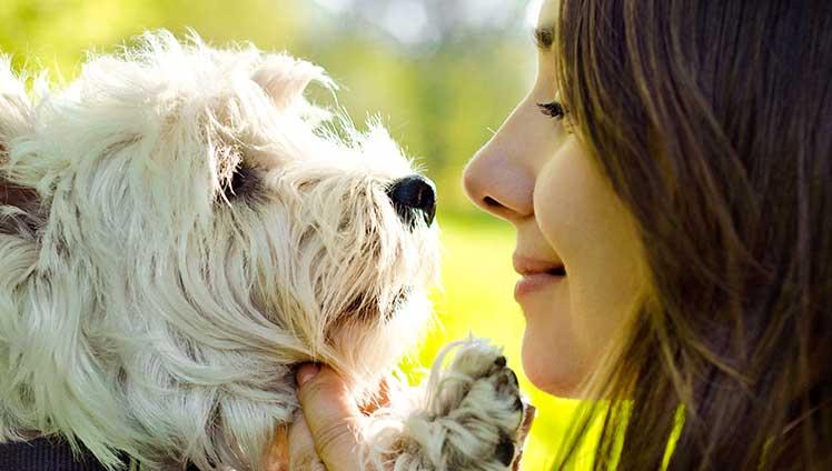 aprenda com a sensibilidade dos animais