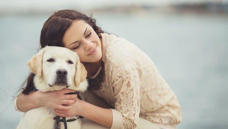 ter um cachorro stories 1