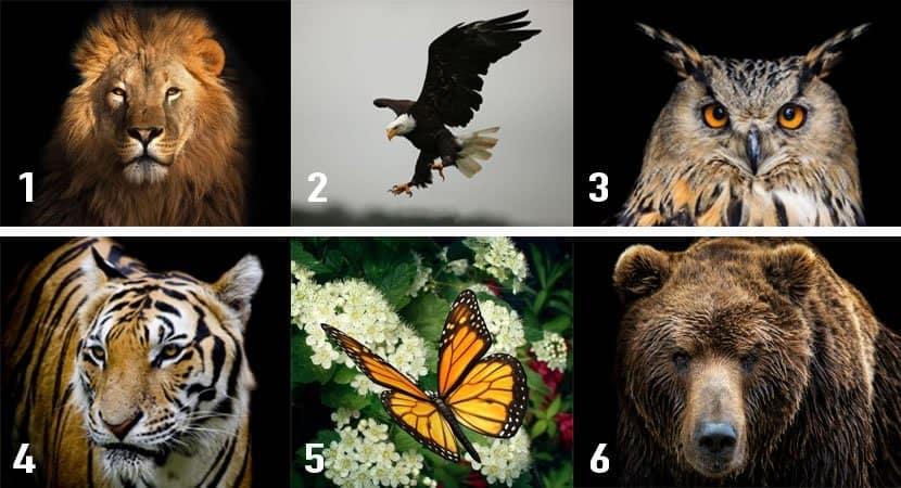 à qual animal mais se assemelha