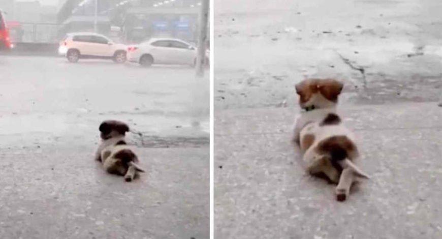 Cachorrinho se deita na calçada para contemplar a chuva durante temporal e viraliza nas redes sociais