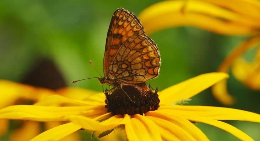 não inveje a borboleta 01