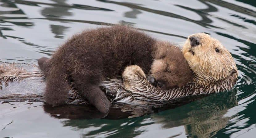 viralamor de mãe