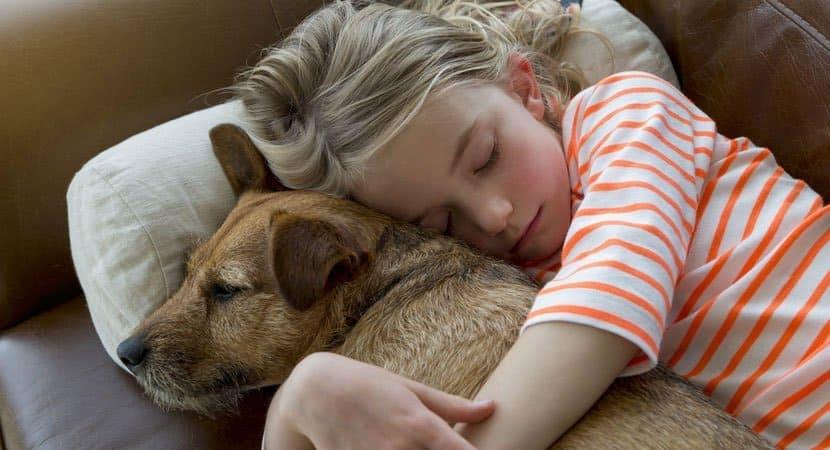 adotar um animal é um ato