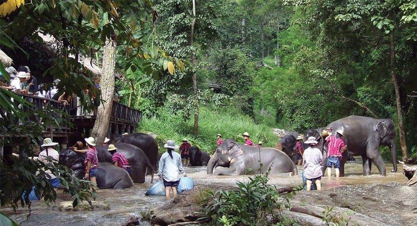 78 elefantes que eram montados por turistas ganham liberdade devido à pandemia2