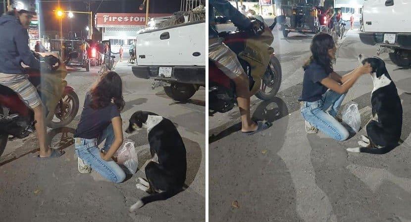 Casal distribui alimentos e carinho para cães de rua esquecidos durante pandemia