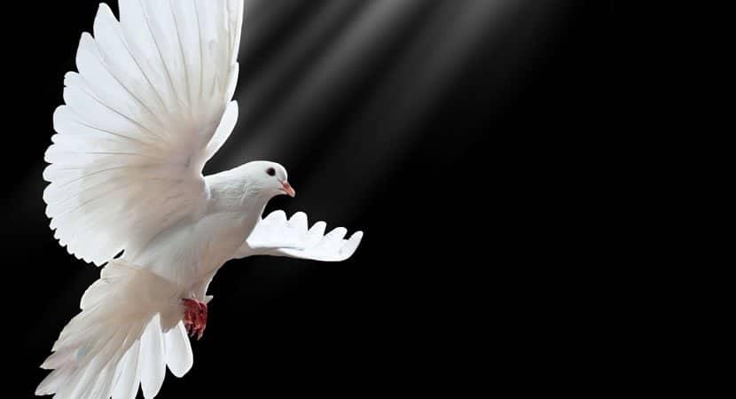 Divino Espírito Santo derrame sobre mim a sua glória Amém