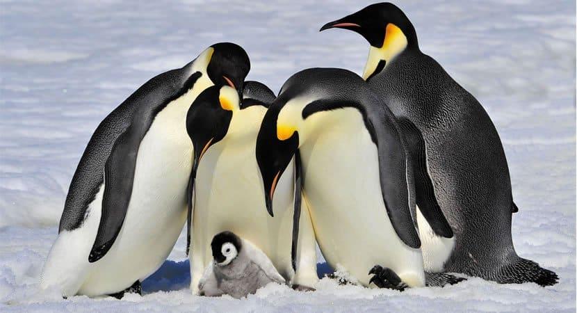 Em meio a pandemia atmosfera se reestabelece e melhora o clima na Antártica