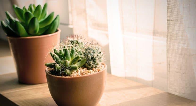 4 plantas que vivem4
