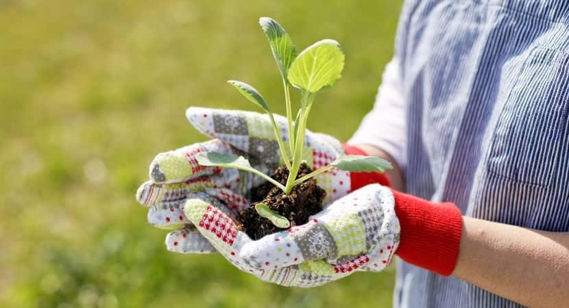 o contato diário com as plantas