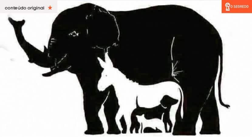 o número de animais