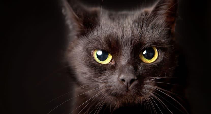 os gatos pretos