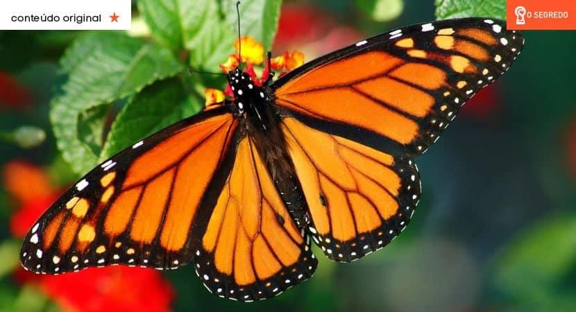 quando as borboletas