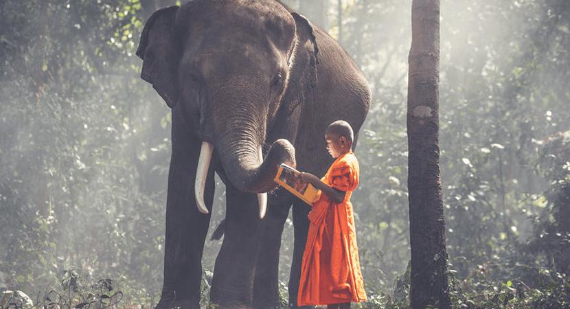 Qual o significado espiritual do elefante