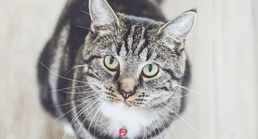 os gatos são muito parecidos com seus donos sugere estudo