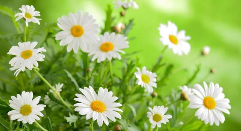 4 plantas curativas que você deve ter em sua casa4