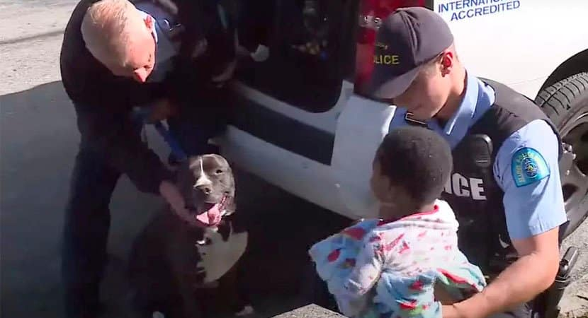 Cão herói protege garoto que estava perdido pelas ruas de bairro