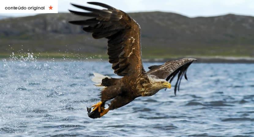 a águia e o peixe a fábula que ensina como agir em situações difíceis