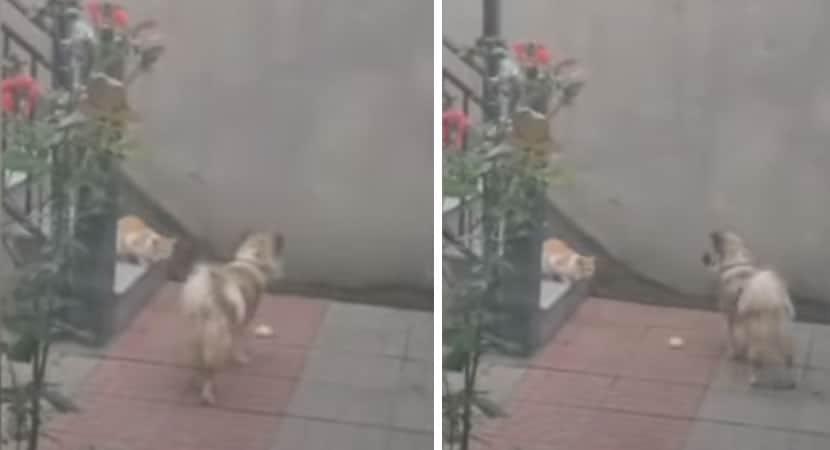 capaCãozinho gentil oferece pão a gato que apareceu em seu quintal