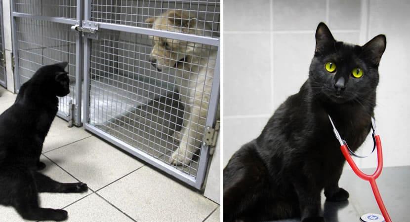gatinho com paralisia oferece carinho e companhia a cães doentes em clínica veterinária