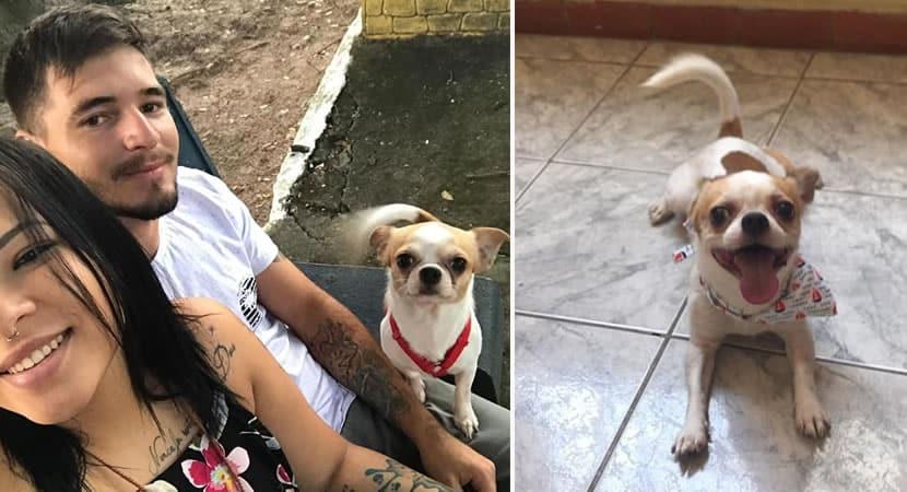 mulher encontra cão desaparecido e recusa carro como recompensa
