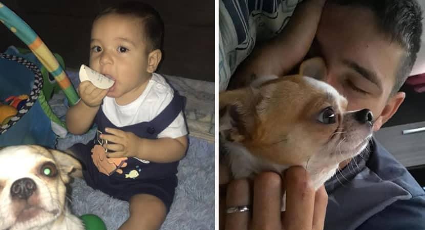 mulher encontra cão desaparecido e recusa carro como recompensa4
