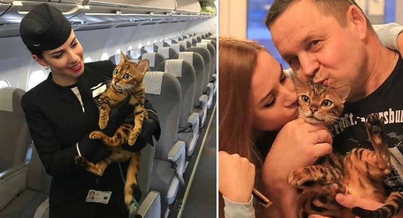não somos bagagem somos seres vivos campanha para que animais viajem com os donos na cabine