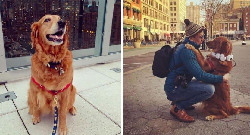 2 cadelinha amorosa anda pela rua distribuindo abraços em todo mundo