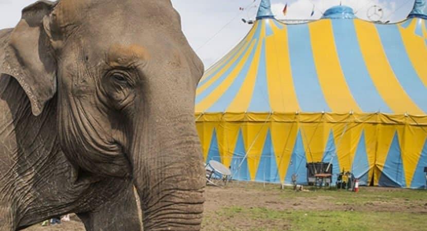 20150713191641 circus elephant tent animal