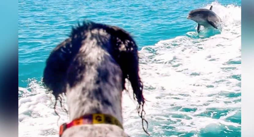 2Cão e golfinho viram melhores amigos e há 7 anos fazem festa nos mares