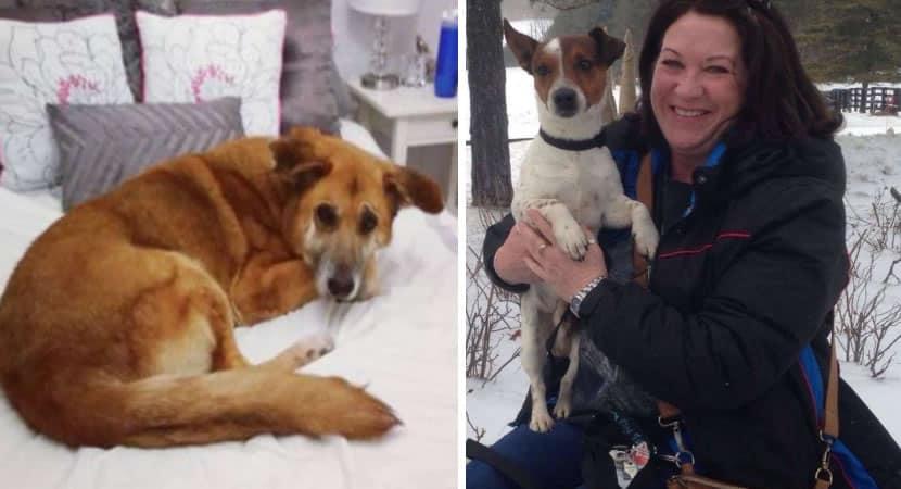 3 Mulher adota 250 cães de uma vez. Ela levou um abrigo inteiro para casa e mudou a vida dos animais