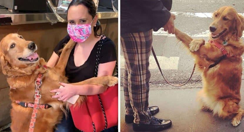 3 cadelinha amorosa anda pela rua distribuindo abraços em todo mundo