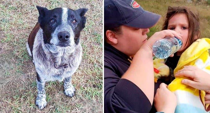 Cãozinho surdo e que quase não enxerga passa 15 horas cuidando de menina que se perdeu em mata