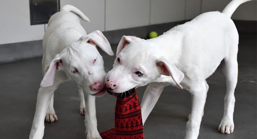 CAPA Cachorro abandonado virou cão guia da irmã cega e muda agora eles têm uma nova família