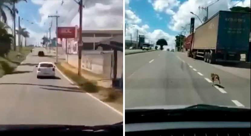 De partir o coração cadela segue veículo após ser abandonada pelo dono